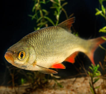 Рыба нашего клуба.